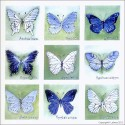 BSP0459 Bundleset for Canvas: Butterflies Bundle
