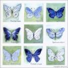 BSP0459 Bundleset for Canvas: Butterflies Bundle